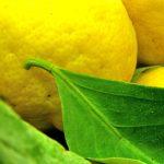 Medycyna naturalna – naturalne źródła witaminy C
